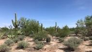 desert-LD9 NW-crop-web